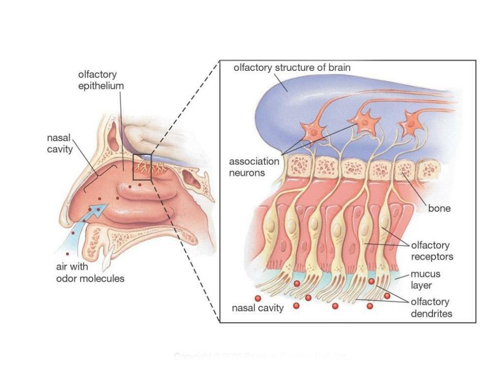 مشکلات بویایی بعد از جراحی بینی